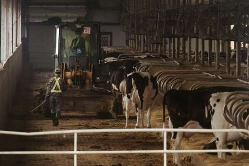 New Mega Farms Designed To Satisfy Chinas Demand For Dairy Products Create An Unwanted Byproducts In