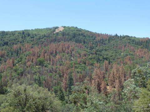New report assesses impacts of drought on U.S. forests