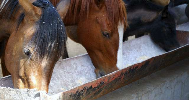 New research questions the use of nutritional supplements in dressage and eventing horses