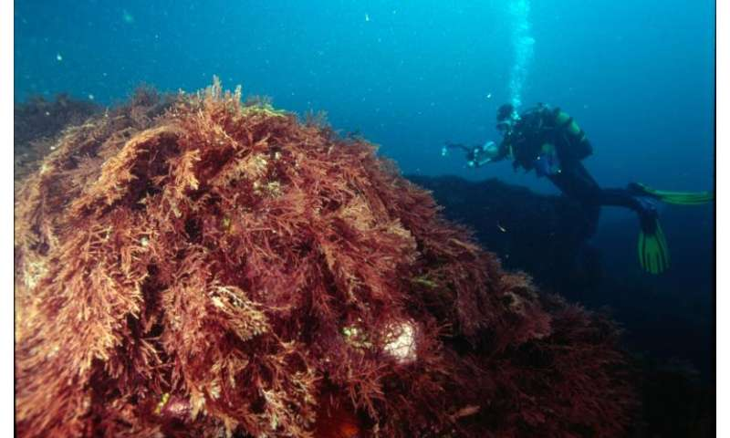 New software to assess the environmental status of marine ecosystems