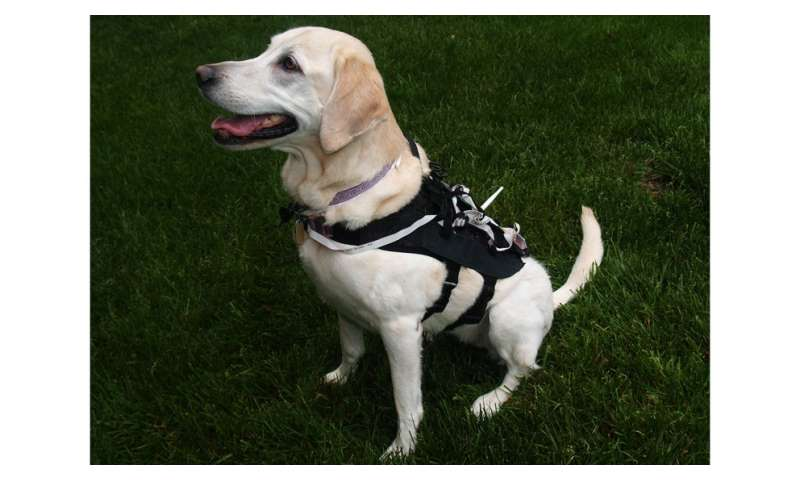 New tech uses hardware, software to train dogs more efficiently