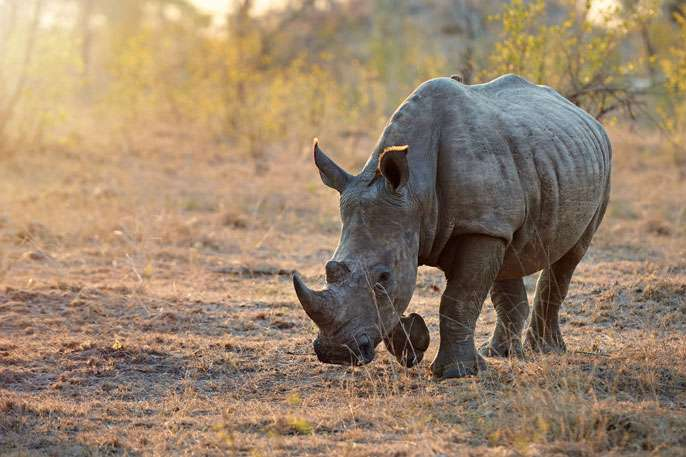 New tool for fighting wildlife trafficking
