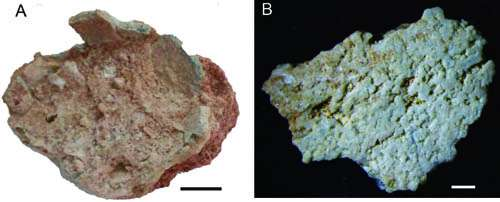 New type of dinosaur eggs found from Early Cretaceous of Gansu Province, China