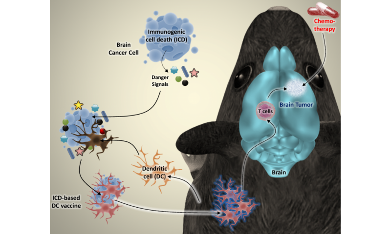 Next-generation immunotherapy offers new hope for beating brain cancer