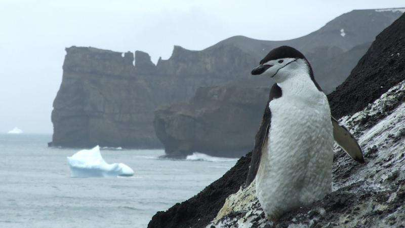 Northern invaders threaten Antarctic marine life