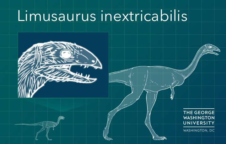 No teeth? No problem -- dinosaur species had teeth as babies, lost them as they grew