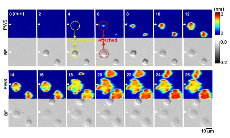Photonic crystal enhanced microscope sheds light on wound healing