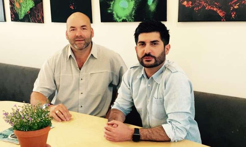 Novel role for neutrophils elucidated