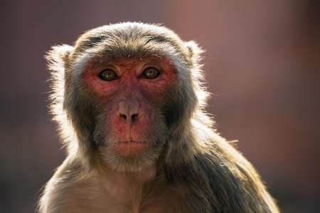 Of mice and monkeys - why are some species more at risk from climate change?