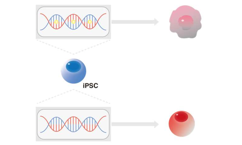 Original cell type does not affect iPS cell differentiation to blood