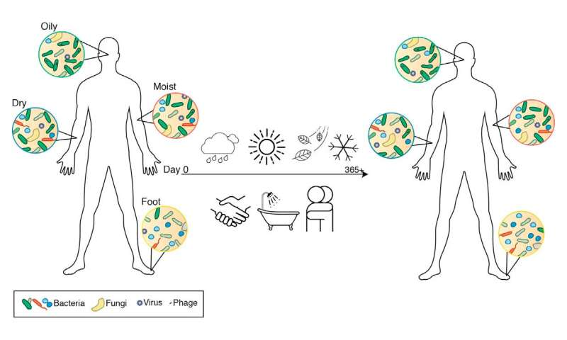 Our personal skin microbiome is surprisingly stable