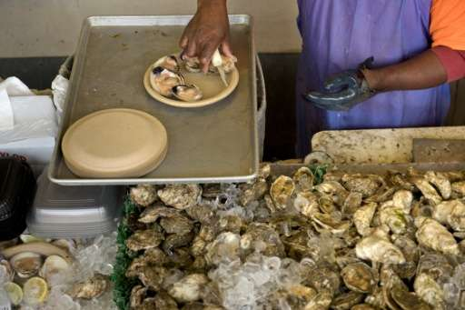 Oysters help keep marine ecosystems healthy by filtering pollutants from the water, protecting wetlands and shoreline from erosi