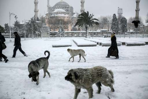 People walk their dogs through snow in Istanbul's the Blue Mosque district on December 31, 2015