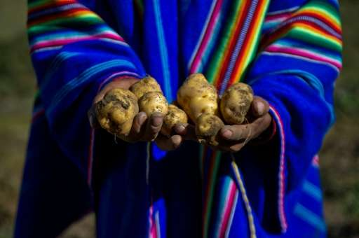 Peru is the country with the greatest diversity of potatoes in the world, with some 3,800 types, differing in size, shape, color
