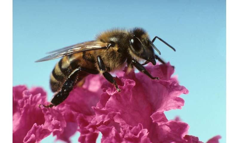 Pesticides used to help bees may actually harm them