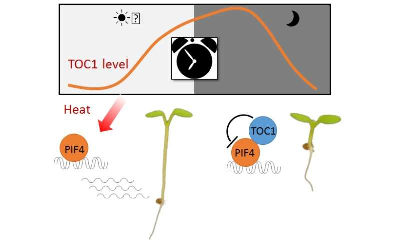 Plant's response to heat stress fluctuates between day and night