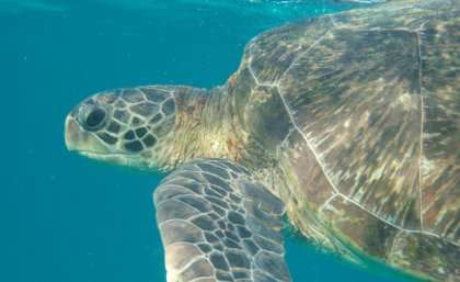 Plastic not so fantastic for marine creatures or our diets