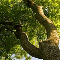 Poor outlook for ash trees
