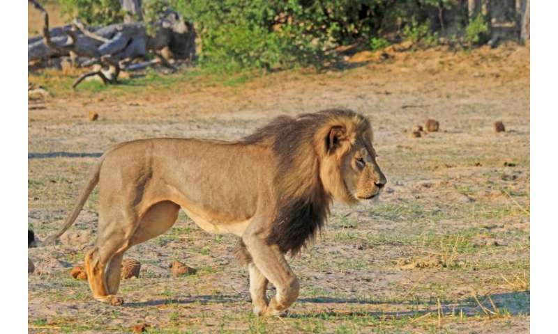 Prediction: High death rates from unnatural causes for male lions in Cecil the Lion's park