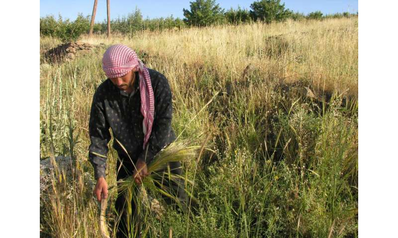 Prehistoric plant remains highlight diverse origins of cereal domestication