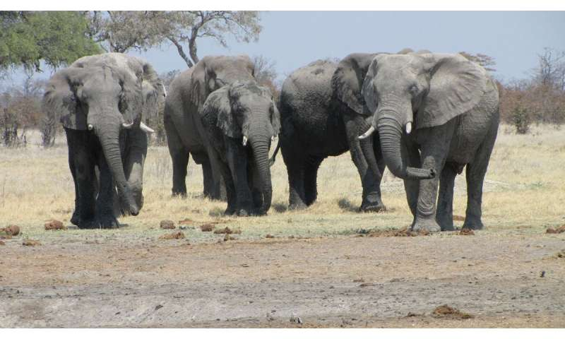 Preventing mass extinctions of big mammals will require immediate action
