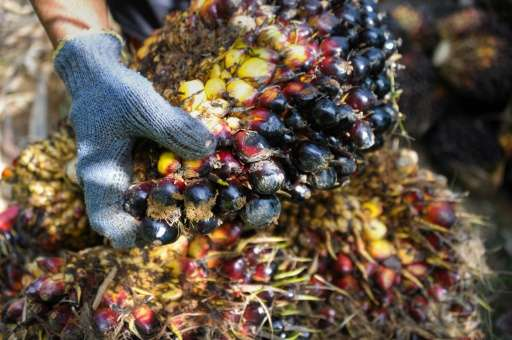 Produced mostly in Malaysia and Indonesia, palm oil causes three times more greenhouse gas emissions per unit of energy than die
