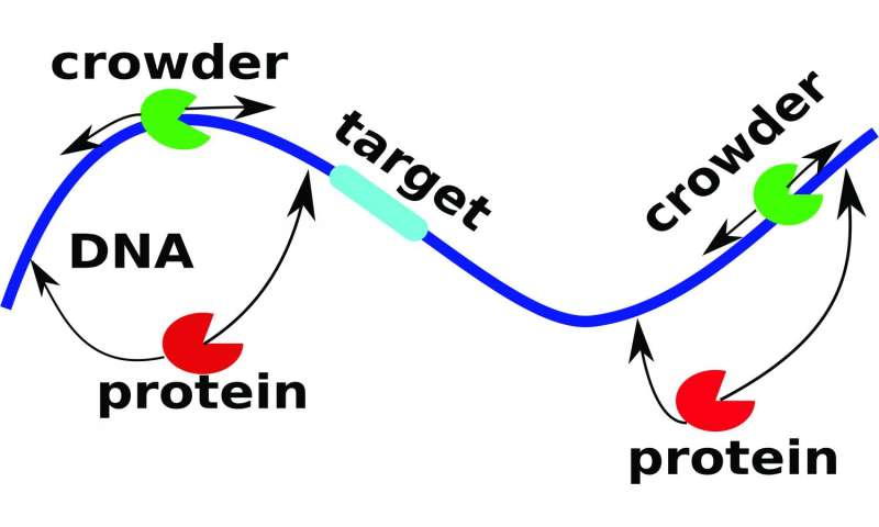Proteins put up with the roar of the crowd