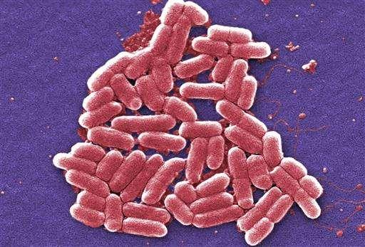 Q&A: Superbug precursor found in US again