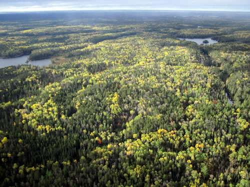 Radical change projected for northern forests is rooted in past, current management
