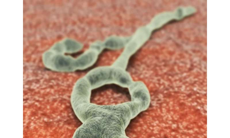 Recombinant type-5 vector-based ebola vaccine safe