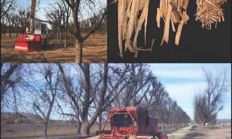Recycling pecan wood for commercial growing substrates