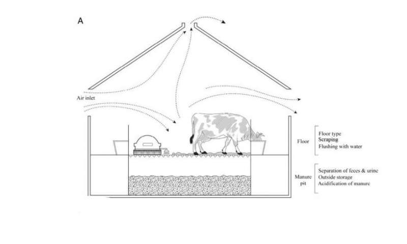 Reducing ammonia pollution from cattle