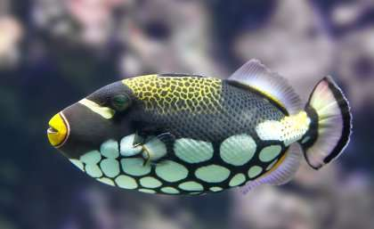 Reef fish see colours that humans can't