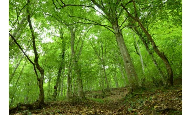 Reforestation policies need to consider climate change, study finds