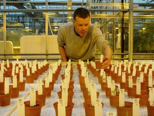 Researcher Wieger Wamelink inspects the plants grown in Mars and moon soil simulant in a research facility at the University of