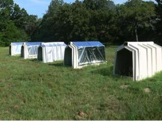 Research focuses on reducing heat stress for calves in plastic hutches