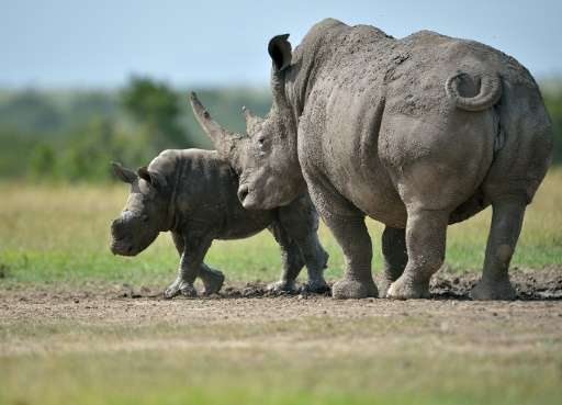 "Rhinoceros and elephants are seen as the ""charismatic"" species that draw attention to the problem of poaching but are"
