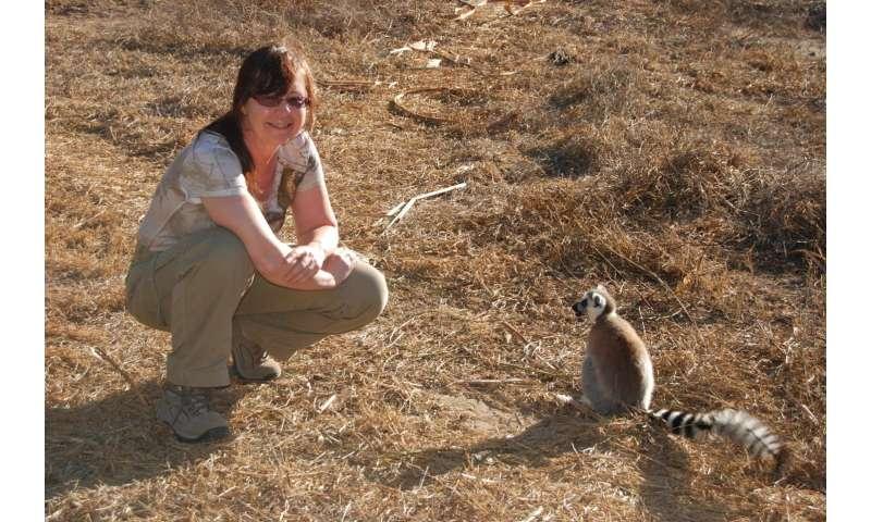 Ring-tailed lemurs: Going, going, gone?
