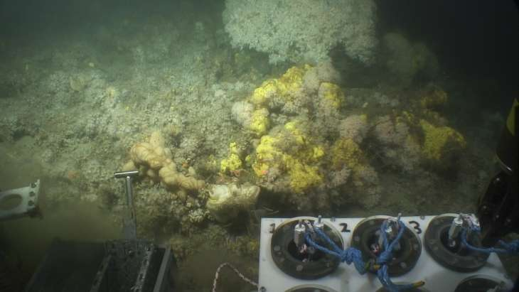 Role of sponges in cold-water coral reefs investigated