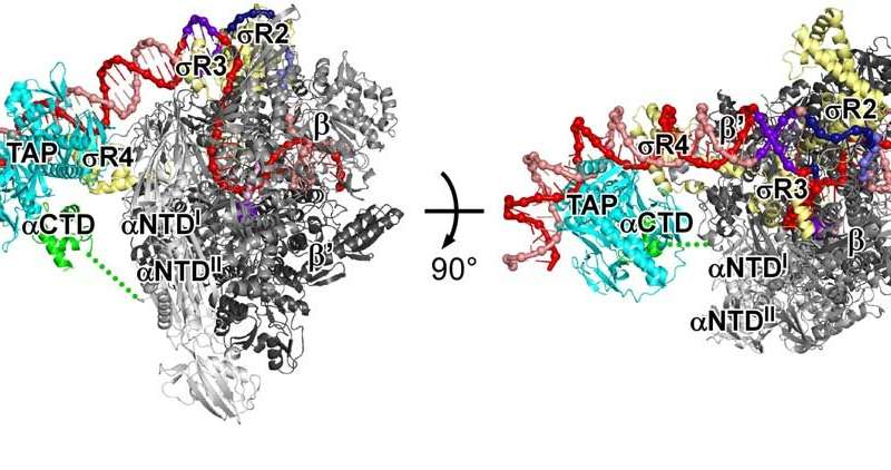 Rutgers researchers show how gene activation protein works