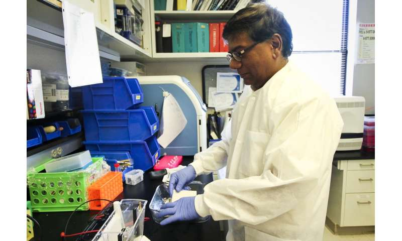 Saint Louis University research: Plant compounds give '1-2' punch to colon cancer