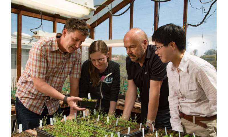Salk researchers chart landscape of genetic and epigenetic regulation in plants