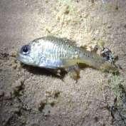 Science maximises prawn restocking success