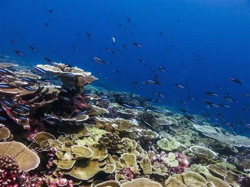 Scientists blame El Nino, warming for 'gruesome' coral death