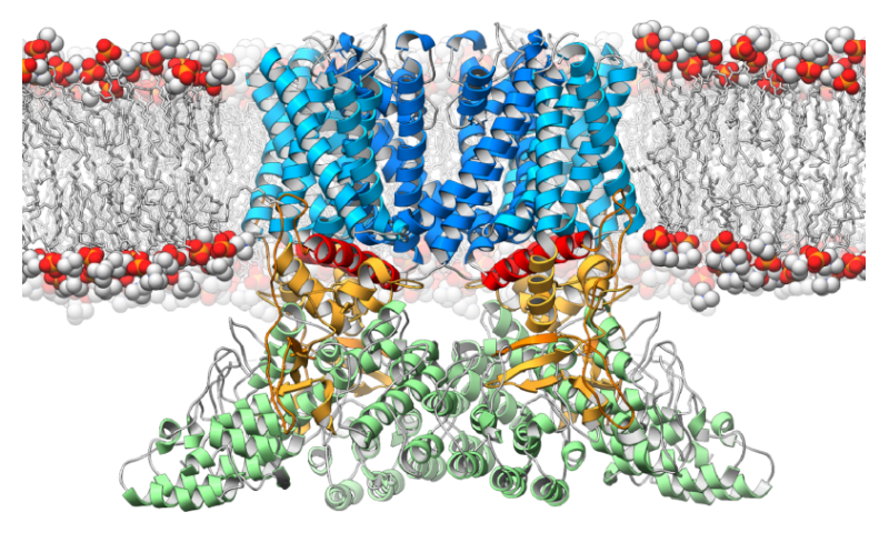 Scientists discover blueprint of body's heat sensor