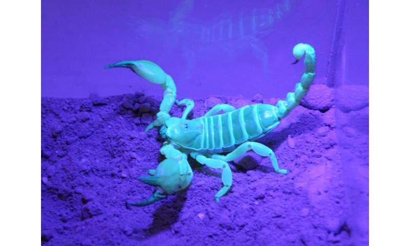 Scorpions have similar tastes in burrow architecture