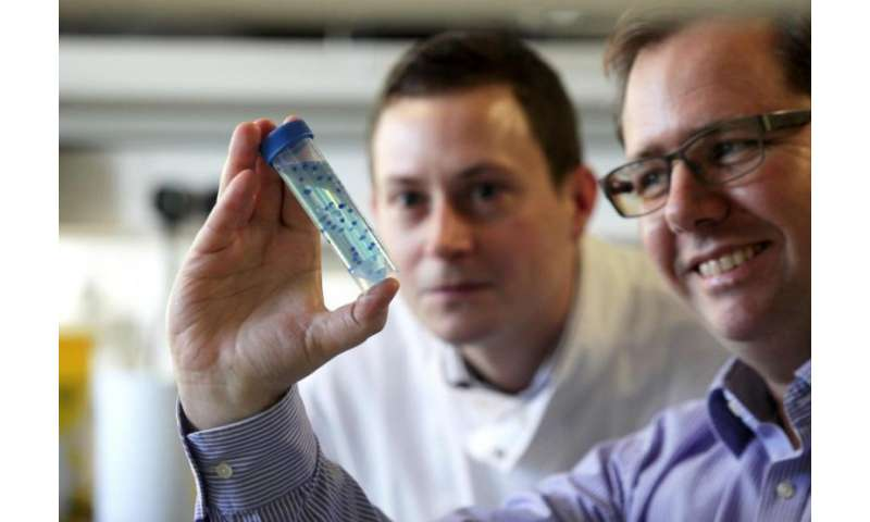 Seaweed offers the solution to transporting stem cells and wound treatment