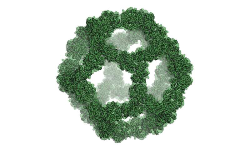 Self-assembling icosahedral protein designed