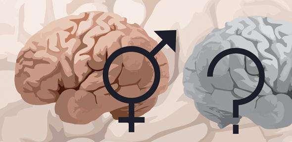 Male Brain Sex 54
