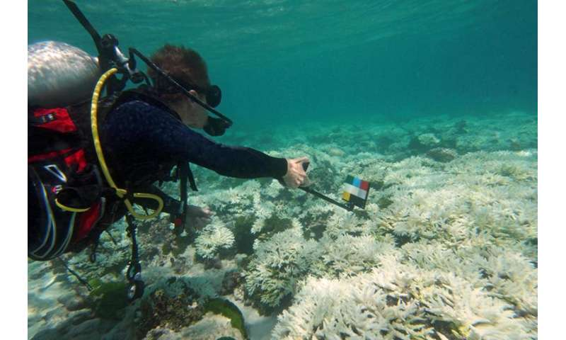 """Seychelles reefs hit hard, but """"pockets of resistance"""" give hope"""